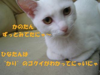 20061016111844.jpg