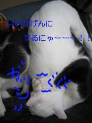20061116103513.jpg