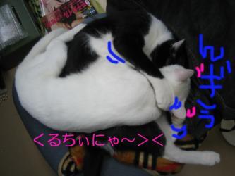 20061116104114.jpg