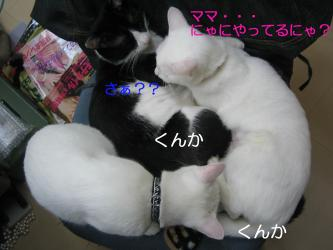 20061116105450.jpg