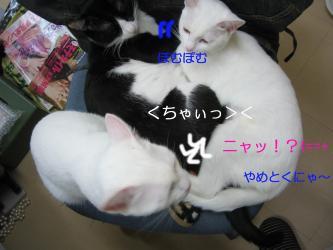 20061116105749.jpg