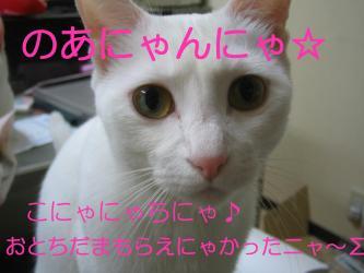20070108104722.jpg