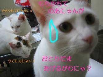 20070108105256.jpg