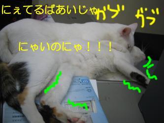 20070108110024.jpg
