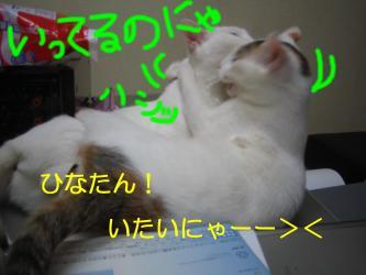 20070108110334.jpg