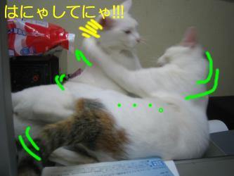 20070108110432.jpg
