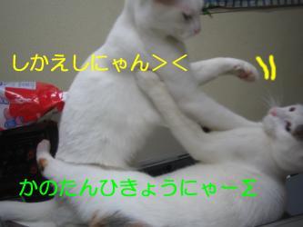 20070108110509.jpg