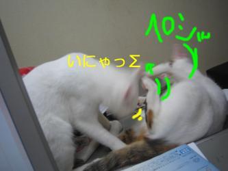 20070108110931.jpg