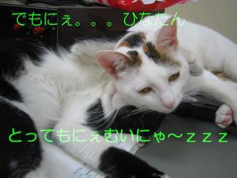 20070110110218.jpg