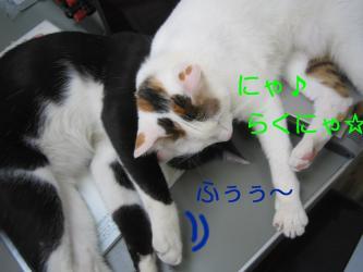 20070110110445.jpg