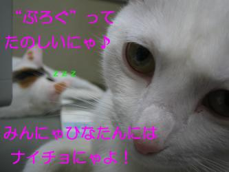20070112092146.jpg