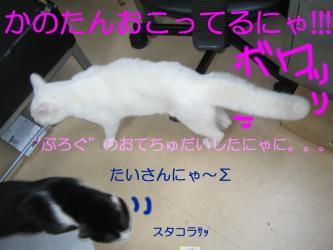 20070112110516.jpg