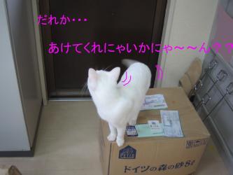20070114081232.jpg