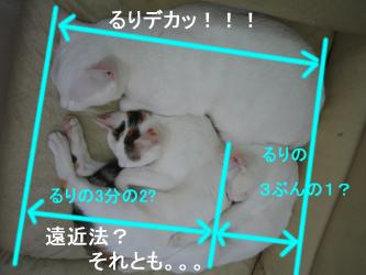 20070114082641.jpg