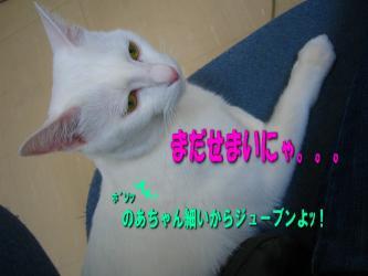のあちゃん