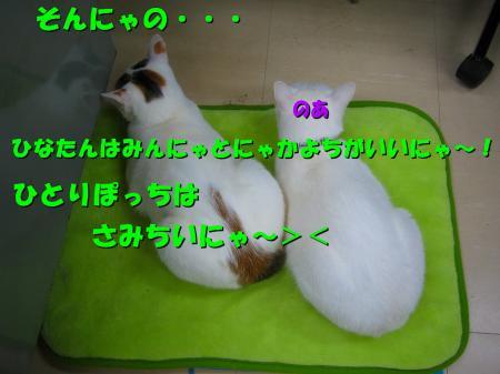 20070405101716.jpg