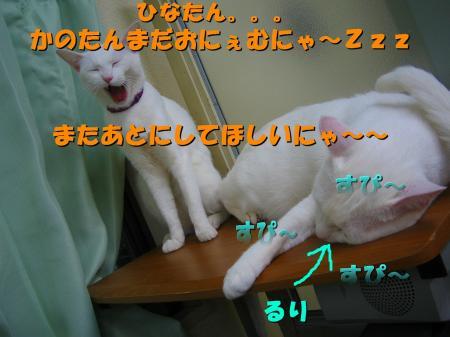 20070405102250.jpg