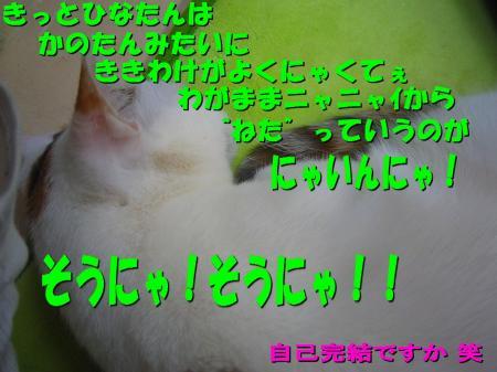 20070405102754.jpg