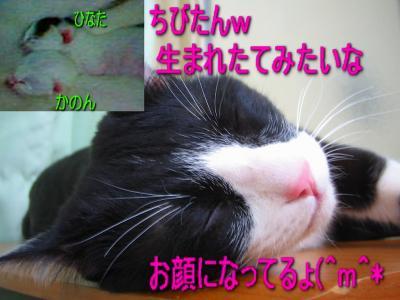 20070412125146.jpg