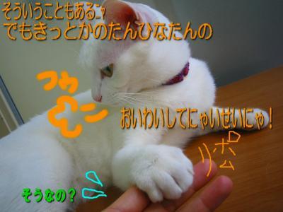 20070413103716.jpg