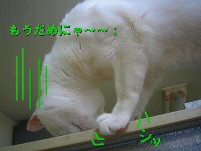 20070414125204.jpg