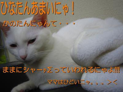 20070415083012.jpg