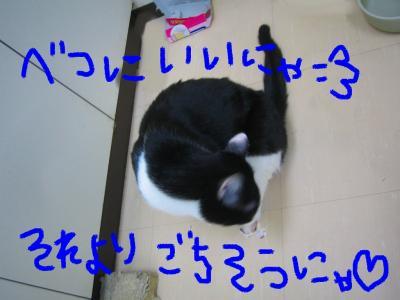 20070505083531.jpg