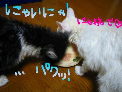 20070611091413.jpg