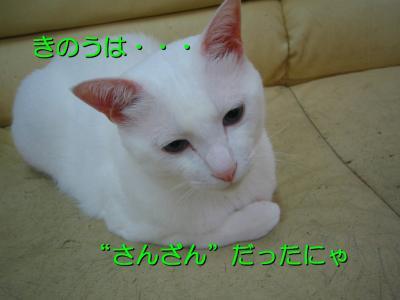 20070710084123.jpg