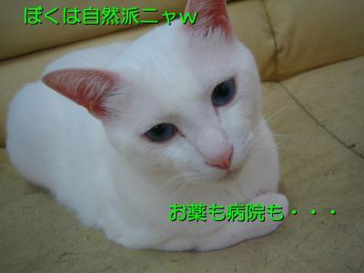 20070710085519.jpg