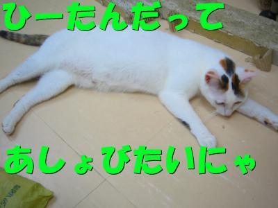 20070719101418.jpg