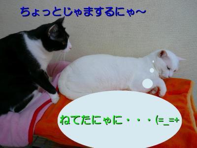 20070911095156.jpg