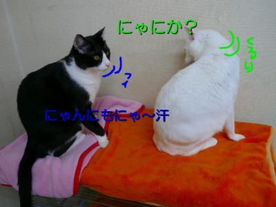 20070911095629.jpg