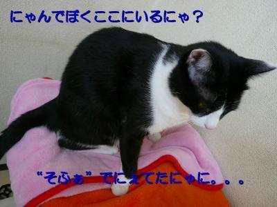 20070911100302.jpg
