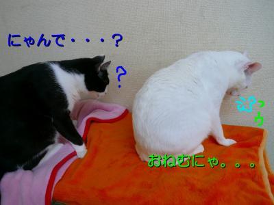 20070911100503.jpg