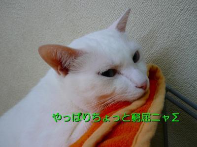 20070911102356.jpg