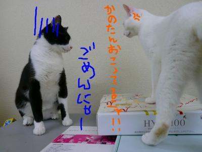20070918090530.jpg