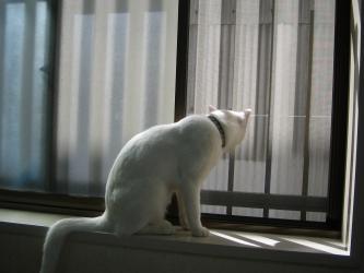 のあ 窓辺で
