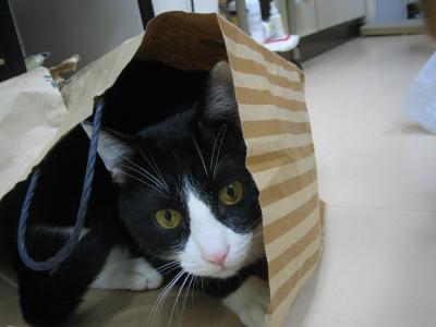 ちびたんin紙袋