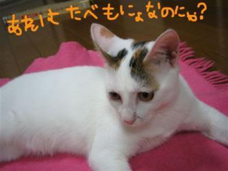 hinata_R.jpg