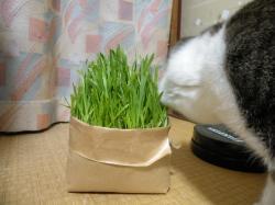 今日の猫草100121