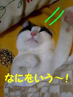 060324_2217~0001.jpg
