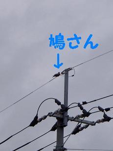 鳥さん発見3
