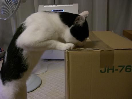 猫砂ニャ2