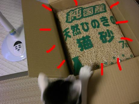 猫砂ニャ3