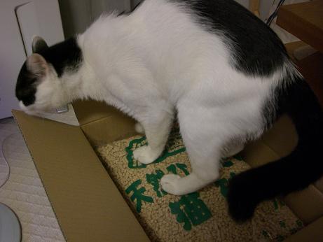 猫砂ニャ5