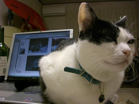 後ろのPCに写っているのはネコ友の「のまちん」だョ!