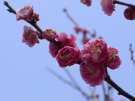 春の訪れ・・・2008 2