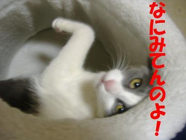 2006_03190029.jpg