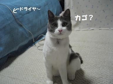 2006_05090003.jpg